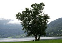 Casais em busca de casamento e divórcio terão de pagar taxas em mudas de árvores - Stock Images